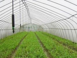 大棚蔬菜灌溉